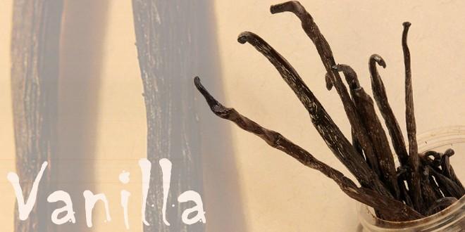 vanilla-vanilia-glyka