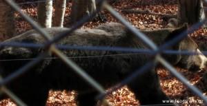 φλωρινα καταφύγιο της αρκούδας του Αρκτούρου